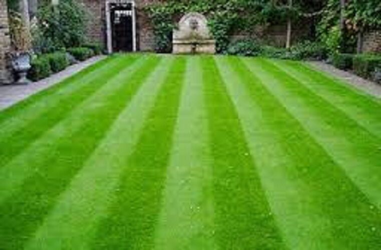 Perfect-Lawns-Direct