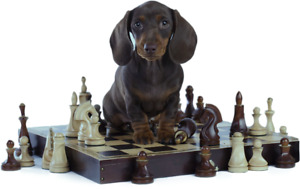 Brain Training for your dog