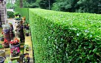 LANDSCAPING AND HEDGE TRIMMING