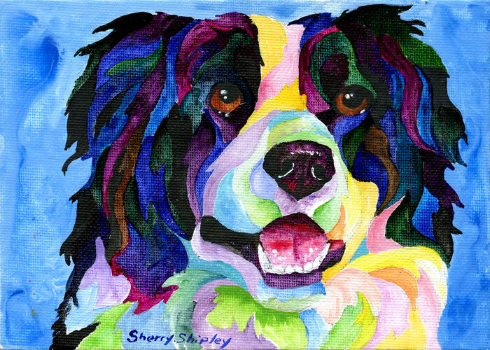 BORDER COLLIE Original 5x7 Acrylic Framed Painting by Sherry Shipley
