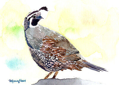 ACEO Limited Edition- Art print, Quail in West valley,Gift for bird lovers