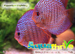 Aquathrive Aquarium Lighting