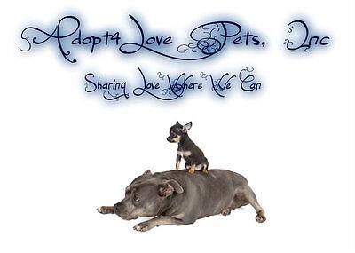 Adopt4Love Pets