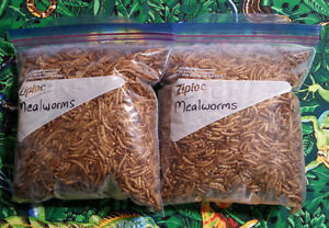 Freeze-dried Mealworms