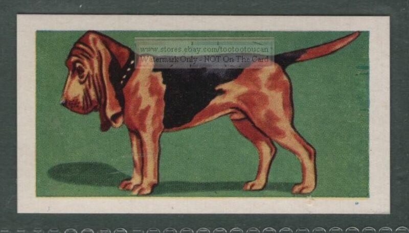 Bloodhound Dog Canine Pet Animal Trade Ad Card
