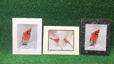 Lot Of 3 Martha Moore Original Signed Cardinal Birds Art Photography Wow