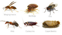 ANTS REMOVAL EXPERT 647-462-6516