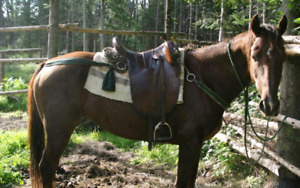 3 horse saddles MUST GO! NEW PRICES