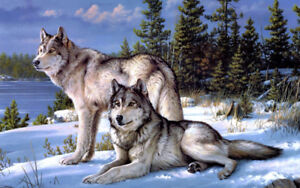Special NEW 5D Diamond Square painting-Wolf counted cross stitch