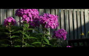 Videographer & Editor at Reasonable Price for Quality 4K London Ontario image 2