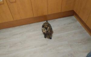 Chatte femelle de 3 ans avec accesoire
