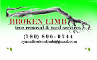 SAFE AND PRECISE TREE SERVICE BY BROKEN LIMB