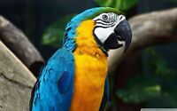 Looking to add a blue and gold macaw to our family!!