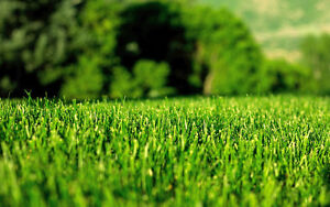 TIDY TURF LAWN MOWING - $25.00 (Front and Back)*