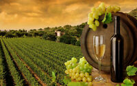 Vinerie Artisanale Sunset Vineyard Wine Crafting 25$ gift cert