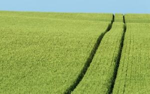 Looking to rent farm land in the Owen Sound, Meaford areas