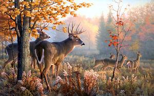 deer hunting (land for lease)