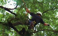 tree removal and pruning in the N.W.