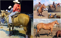 BEGINNER Rope Horse 4 Sale or Trade