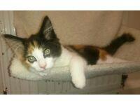 Female Kitten 19weeks old