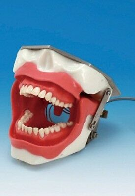 Dental Oral Anesthesia Simulator Manikin Brand New Not Used Can Provide Quantity