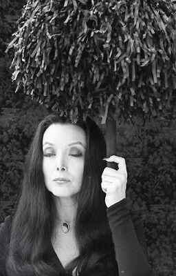 Original Addams Family Halloween (CAROLYN JONES THE ADDAMS FAMILY HALLOWEEN ORIGINAL 1977 NBC TV PHOTO)