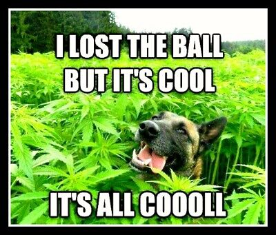 """4"""" Funny Stoned Dog in Weed Field vinyl sticker. Marijuana, pot decal for laptop"""