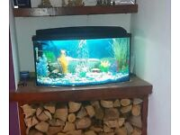 Bow front Fish Tank and Fish 32x15x15 **£120 OVNO ****