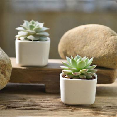 - White Mini Square Glazed Ceramic Succulent Planter Porcelain Flower Pot Garden