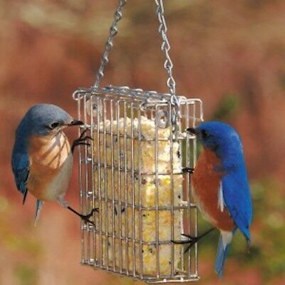 GC - Droll Yankee - Stainless Steel Suet Feeder