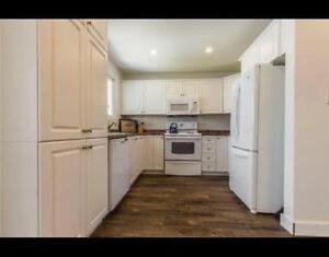 Shared house with basement room available