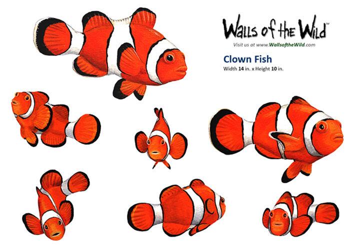 Nemo style clownfish