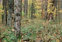 Looking to Lease Land for Hunting 2016