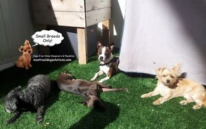 SMALL DOG RESORT IN HOME OF A CERTIFIED TRAINER West Island Greater Montréal image 2