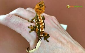 terrarium, accessoire et reptile