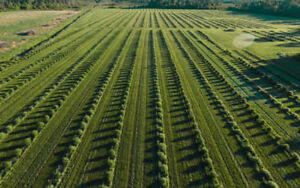 Organic Winery and Orchards for Sale; Featuring Haskap