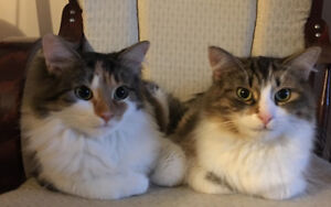 I am looking to rehome my two cats.