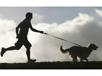 Dog-RUNNING Service