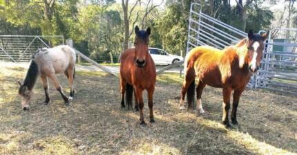 HORSE FRIENDLY RENTAL NEEDED PLEASE ~ GREATER DORRIGO AREA Dorrigo Bellingen Area Preview