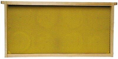 - Harvest Lane Honey WWFFD-101 Deep Brood Plastic Foundation Frame
