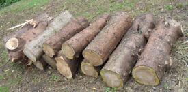 Conifer PINE Timber Wood for Fuel or Carving, Firewood logs, Stove, Woodburner - Garden, Landscaping