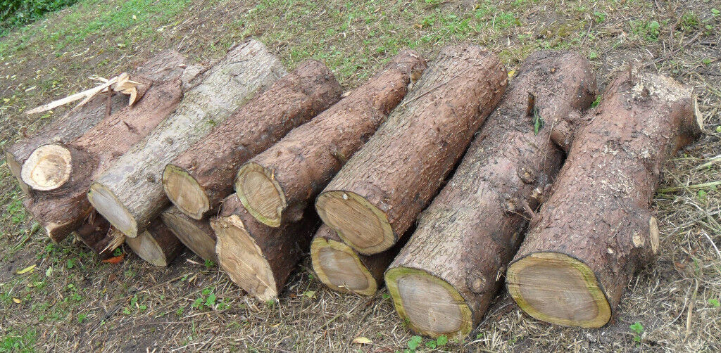 Conifer PINE Timber Wood - for Carving - Fuel, Firewood logs, Stove, Woodburner, Heater. Landscaping