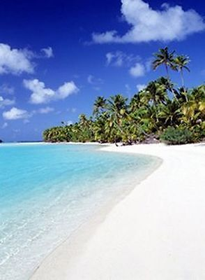 Palm Hideaway   Tropical Beach Poster 24X36 Ocean Photo Scenic 36050