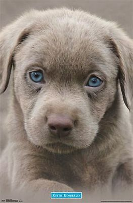 PUPPY - BLUE EYES POSTER - 22x34 CUTE DOG 14439 - Puppy Posters
