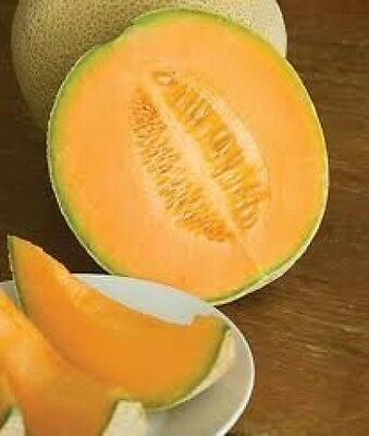 35 HALES BEST JUMBO CANTALOUPE 2019 (all non-gmo heirloom vegetable