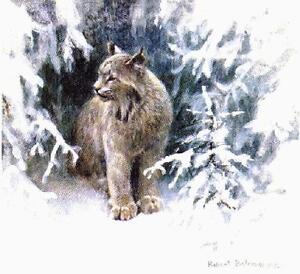 Robert Bateman Prints - Lynx and Loon