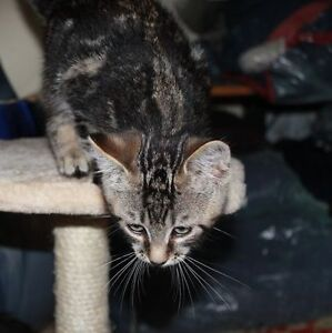 Little rescued kittens looking for homes