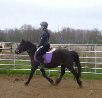 Cute, stocky medium pony available for part board