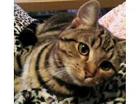 Missing/stolen cat