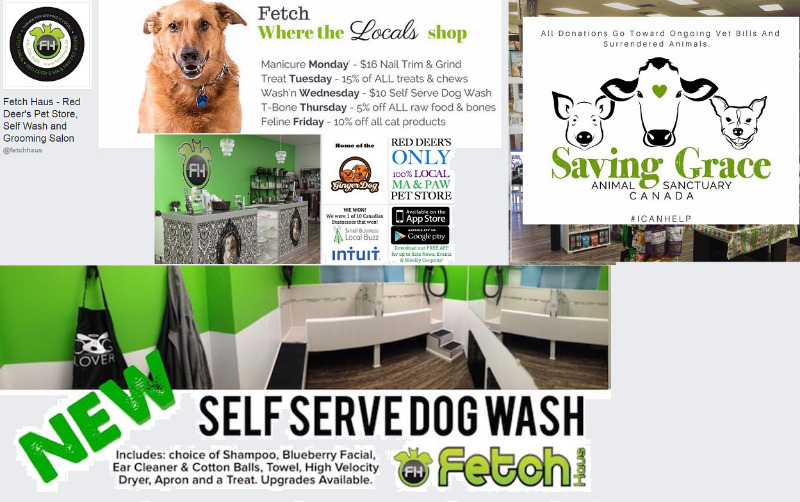 Fetch haus red deers pet store self wash and grooming salon fetch haus red deers pet store self wash and grooming salon animal pet services red deer kijiji solutioingenieria Image collections